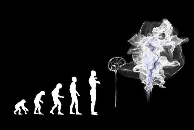 evolution-3885331_960_720.jpg