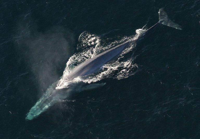 blue-whale-1198719_1920 - Copy.jpg