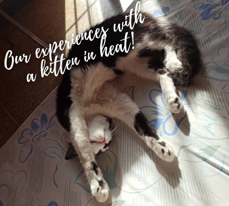 ¡Nuestras experiencias con una gatita en celo! 1.jpg