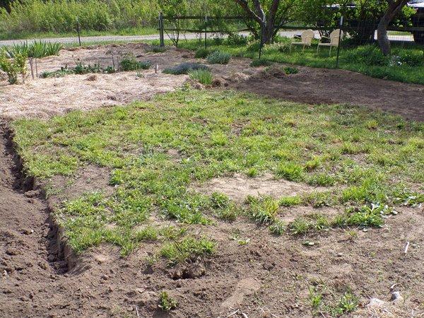 Big garden  weeds getting smaller crop May 2020.jpg