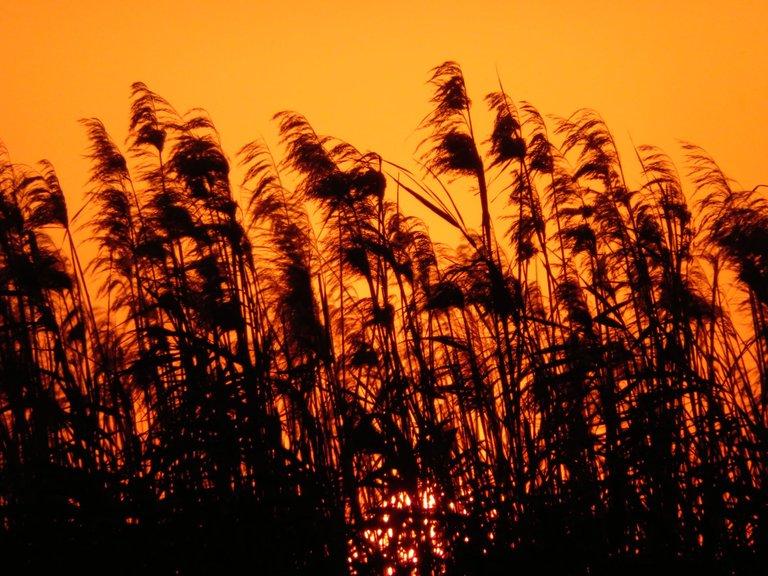 2462-Sunset.JPG