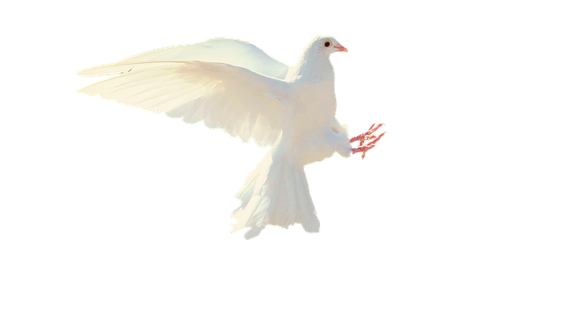 dove-2755928_640.png