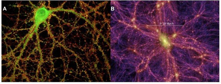 brain cell universe.jpg