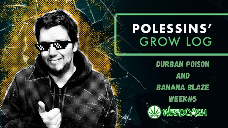DURBAN POISON AND BANANA BLAZE WEEK #1.jpg