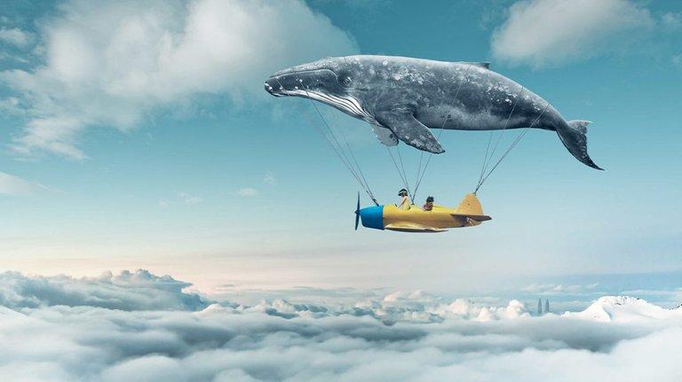 Whale_Airplane_Clouds_1296x728-header-1296x728.jpg