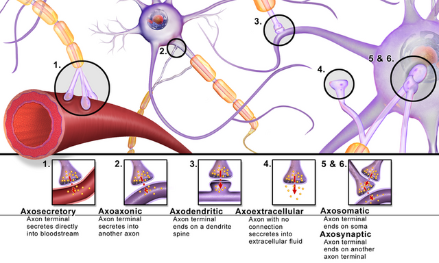 Different types of synapses