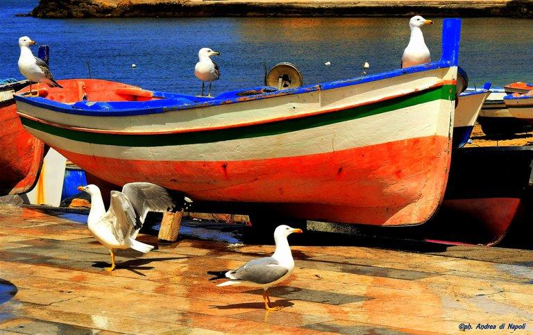 Gabbiani in barca.jpg