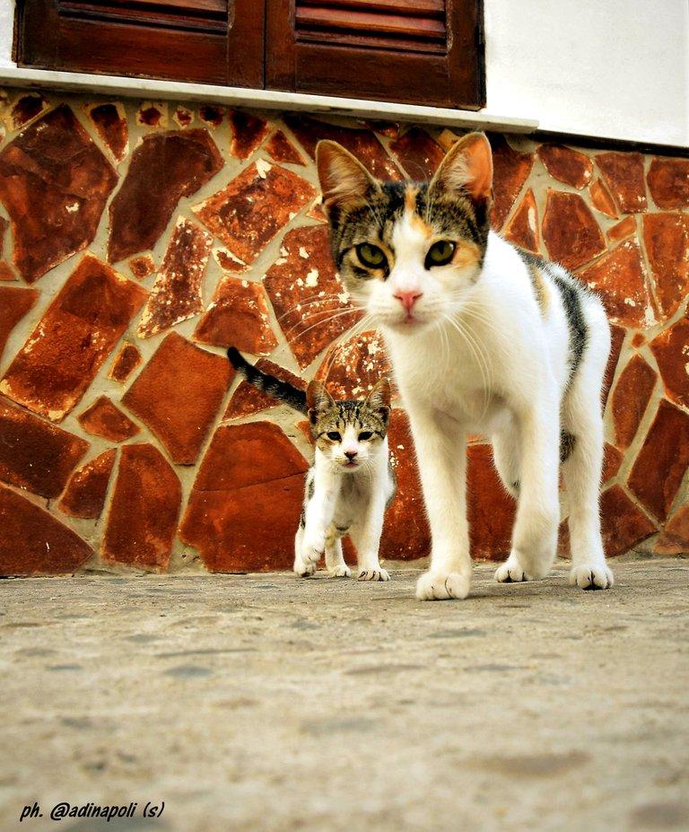 z Kittens Gattini.jpg