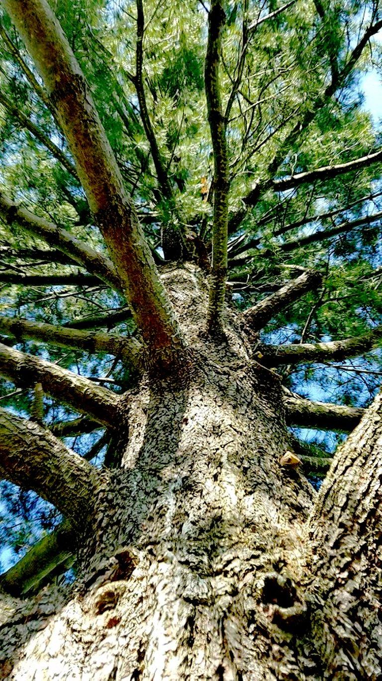 tree on battlefield.jpg