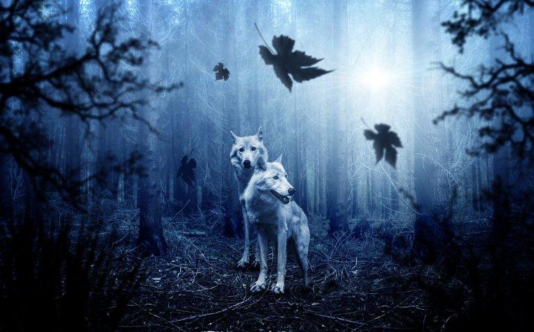 wolf2864647_1920.jpg