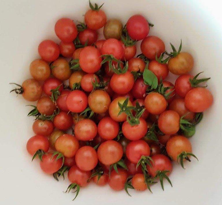 Veg Cherry tomatoes.jpg