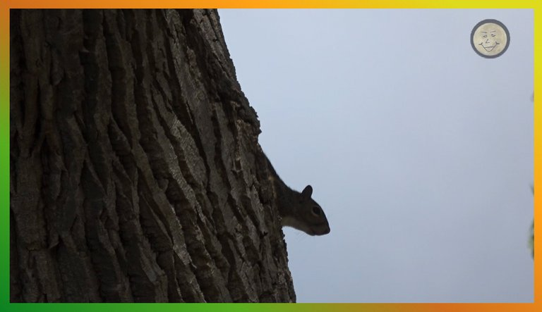 LakeThingsSquirrel2.jpg