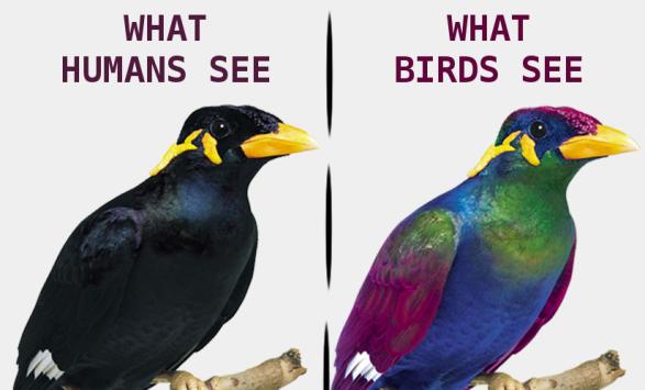 human vs bird.png
