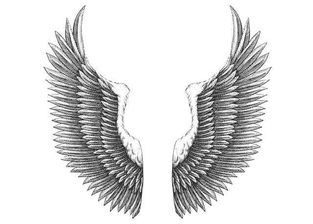 Eagle_sWingArt.jpg