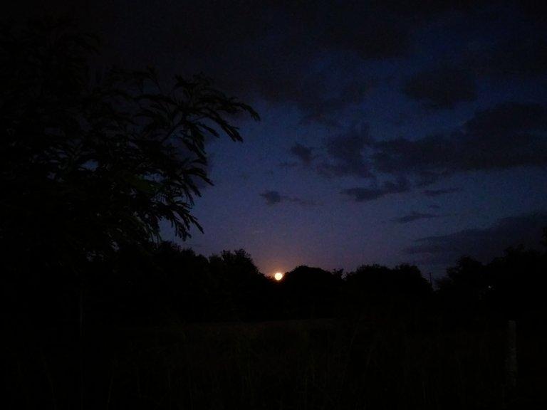 Luna1.jpg