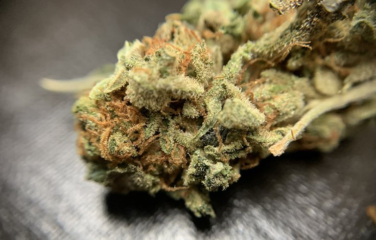 GirlScoutCookies-001.jpg
