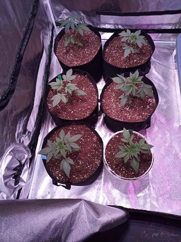 Grow image-20200329-3.jpg