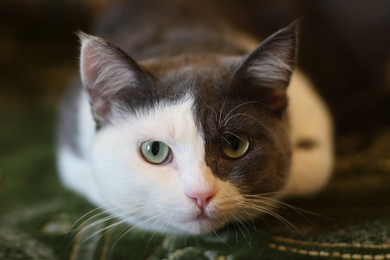 gato.jpg