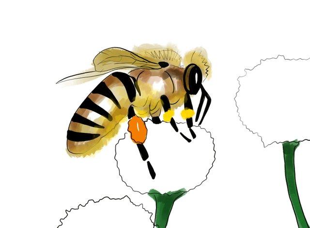 Bee (353).jpg