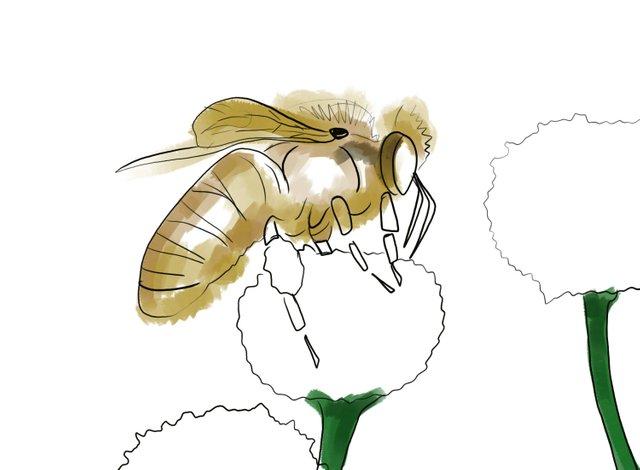 Bee (350).jpg