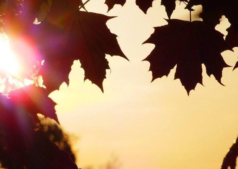 0667-Leaves.jpg