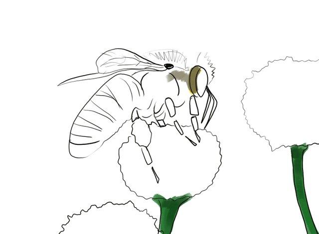 Bee (348).jpg