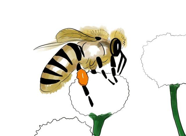 Bee (352).jpg