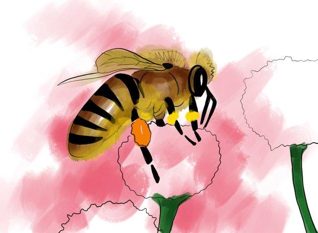 Bee (354).jpg