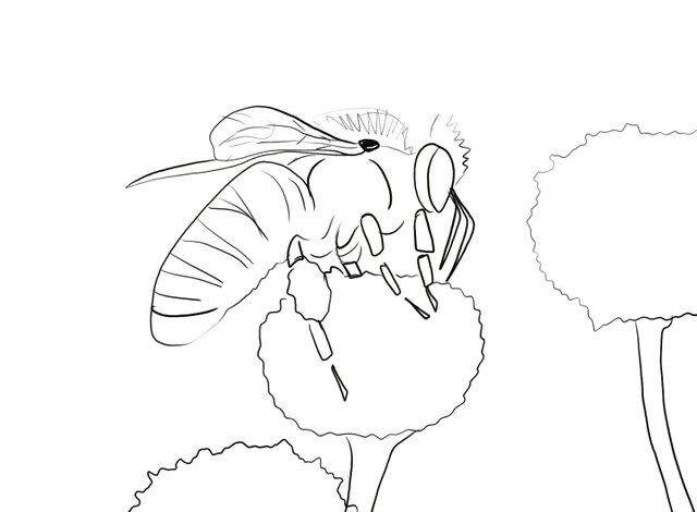 Bee (347).jpg