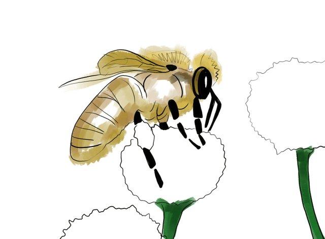 Bee (351).jpg