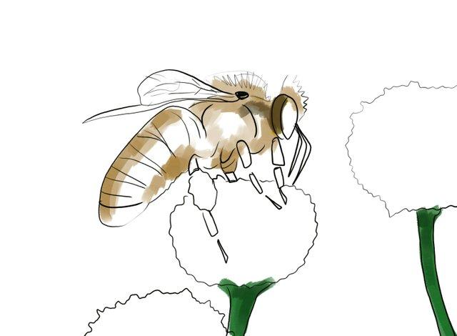 Bee (349).jpg
