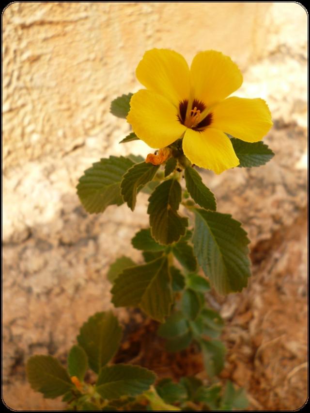 Flores004.1.png