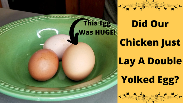 This Egg Was HUGE! 1.png