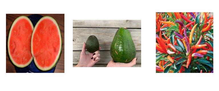 3.better-fruits.png