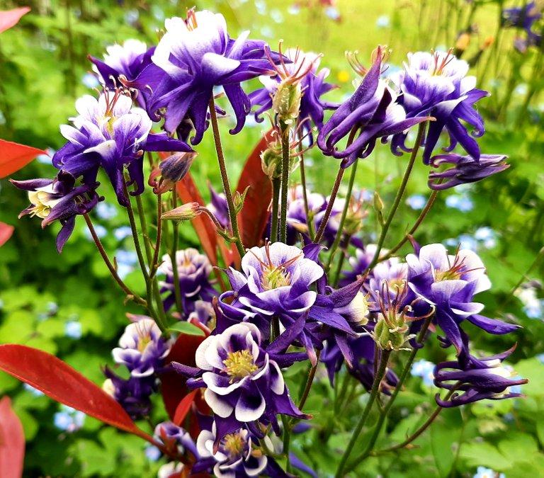 Playfulfoodie garden flowers