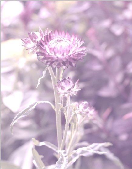 color_colorize3.jpg