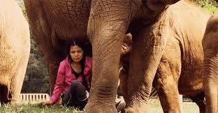 Lek and the elephants. (credits to: https://www.featureshoot.com/2018/03/story-fearless-woman-saves-elephants/)