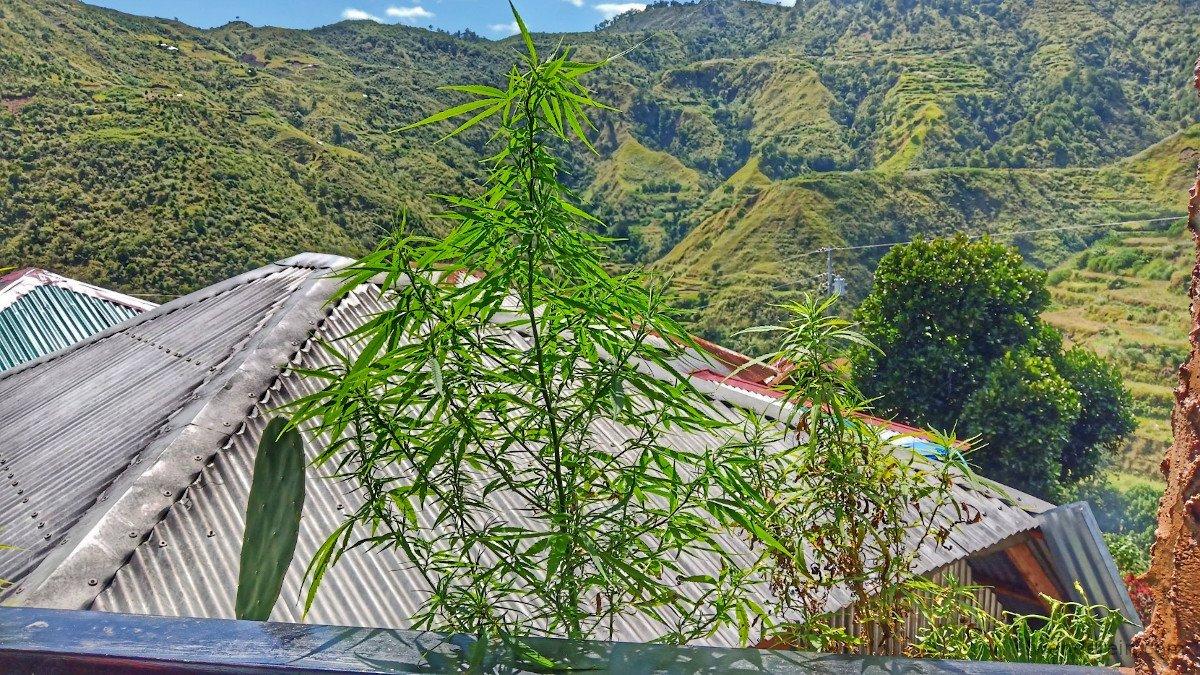 plant pot ;)