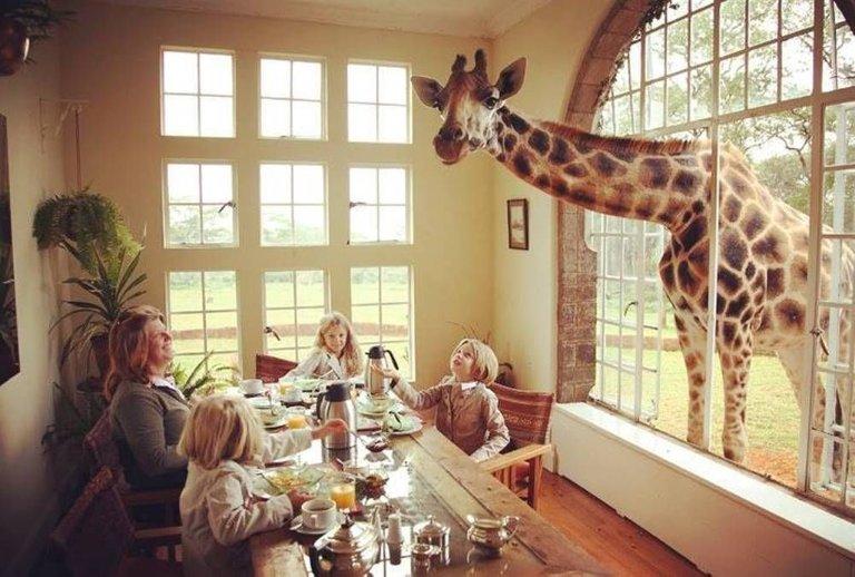 giraffe manor.jpg