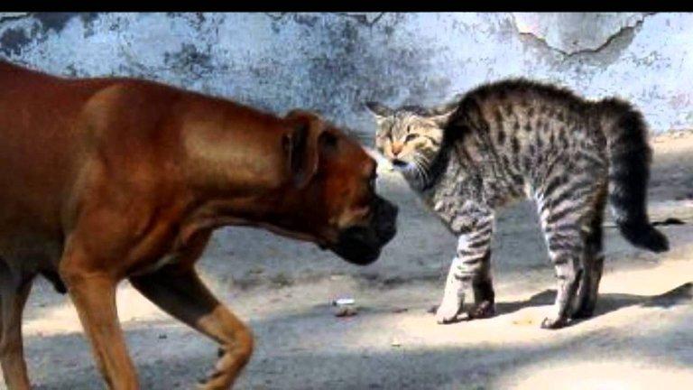 Perros y gatos peleando