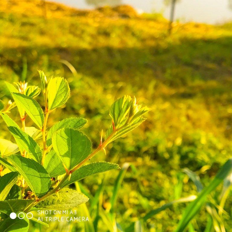 PicsArt_11-27-05.14.46.jpg