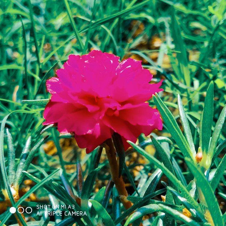 PicsArt_11-28-01.27.47.jpg