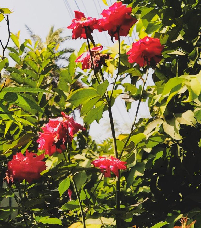 PicsArt_12-01-09.44.58.jpg