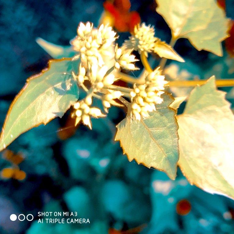 PicsArt_11-28-01.23.52.jpg