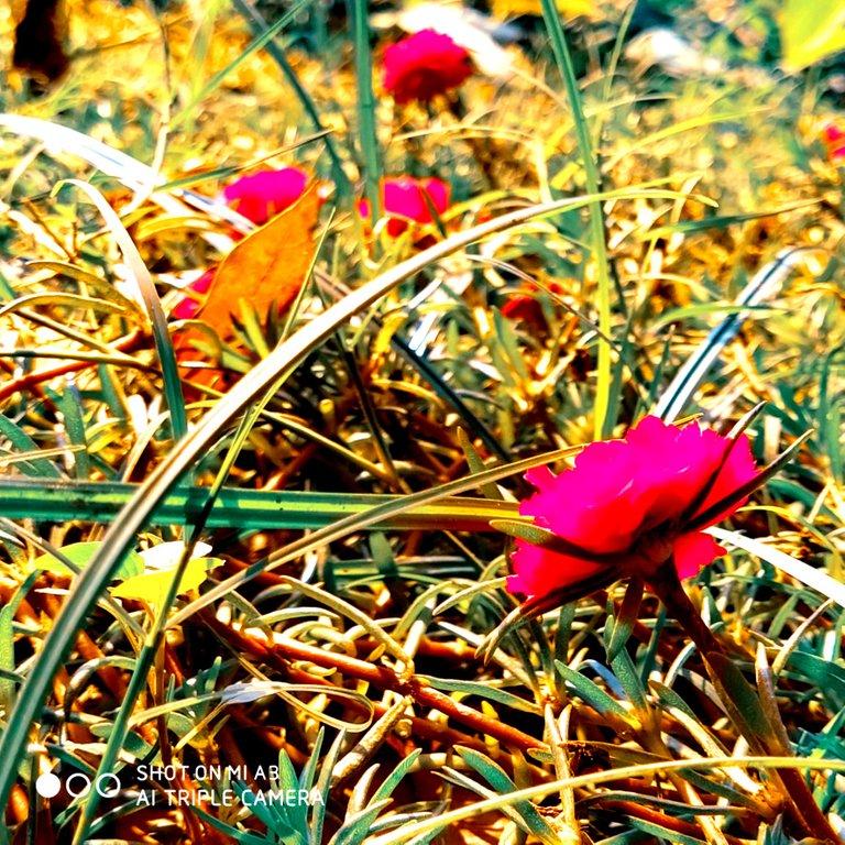 PicsArt_11-28-01.25.12.jpg