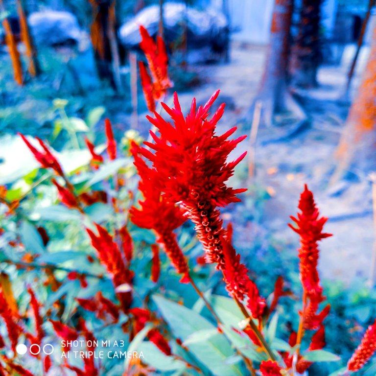 PicsArt_11-28-01.23.23.jpg