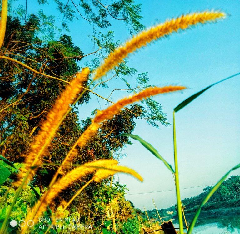 PicsArt_11-27-05.13.05.jpg