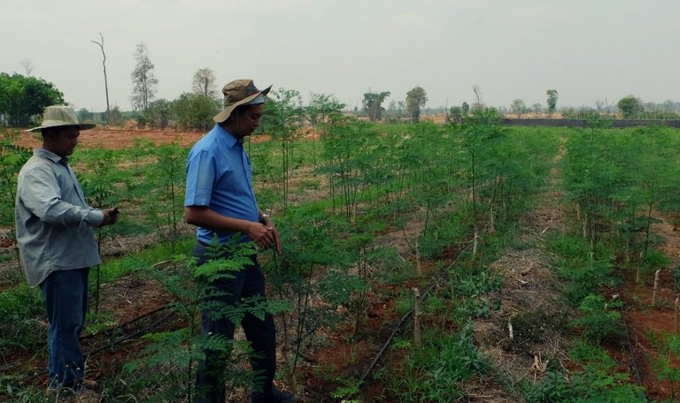 Organic-Moringa-Farm-3.jpg