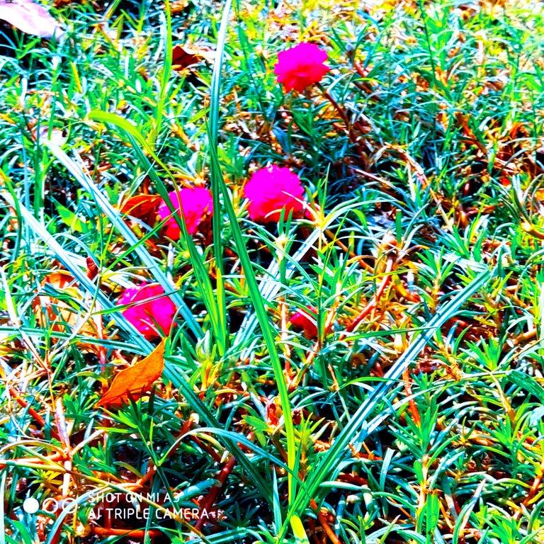 PicsArt_11-28-01.26.26.jpg