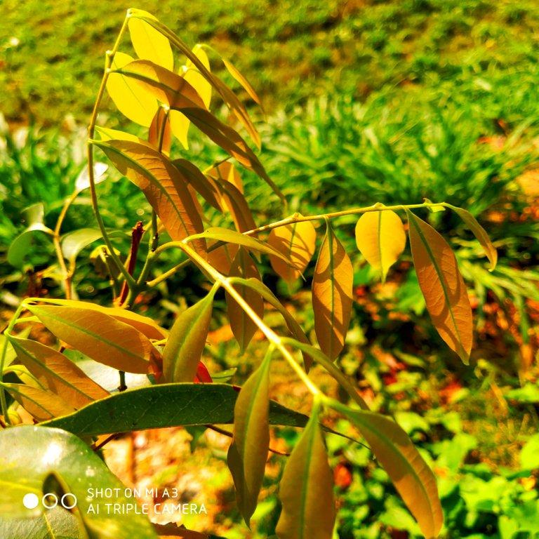 PicsArt_11-28-01.24.48.jpg